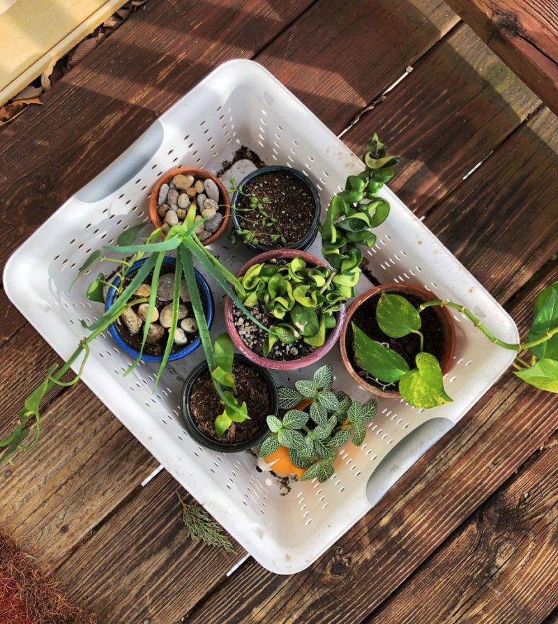 EVERYTHING YOU NEED TO KNOW  ABOUT PLANT PARENTHOOD